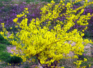 David Manning Blog Yellow Bush